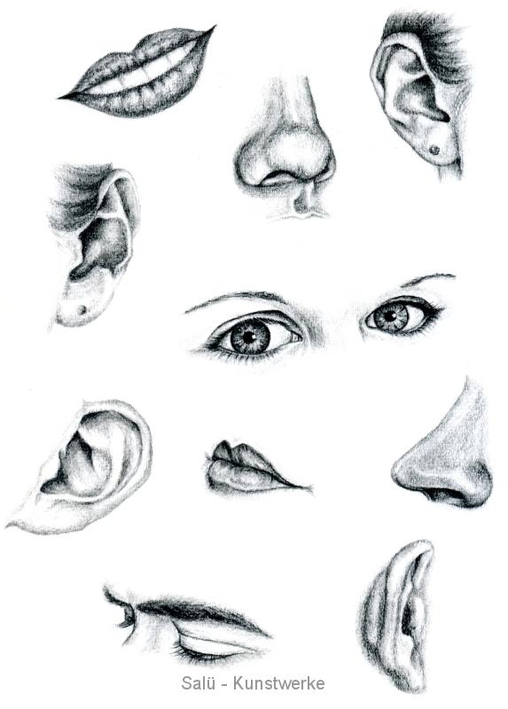 Studie: Gesichtsteile