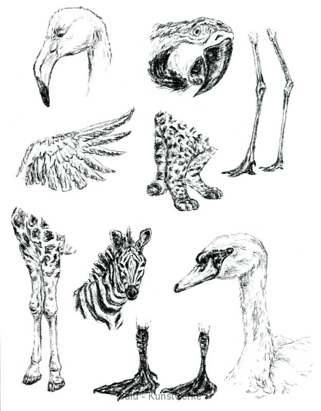 Studie: Tiere