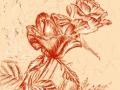 Rosen mit schleiherkraut